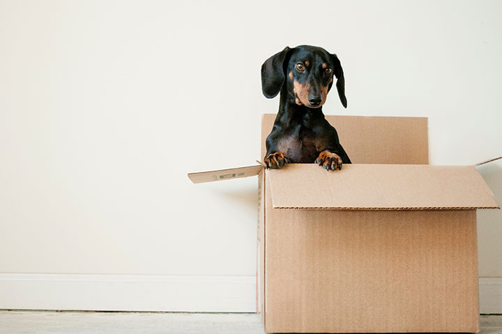 Moving Tips and Tricks - dog in a moving box